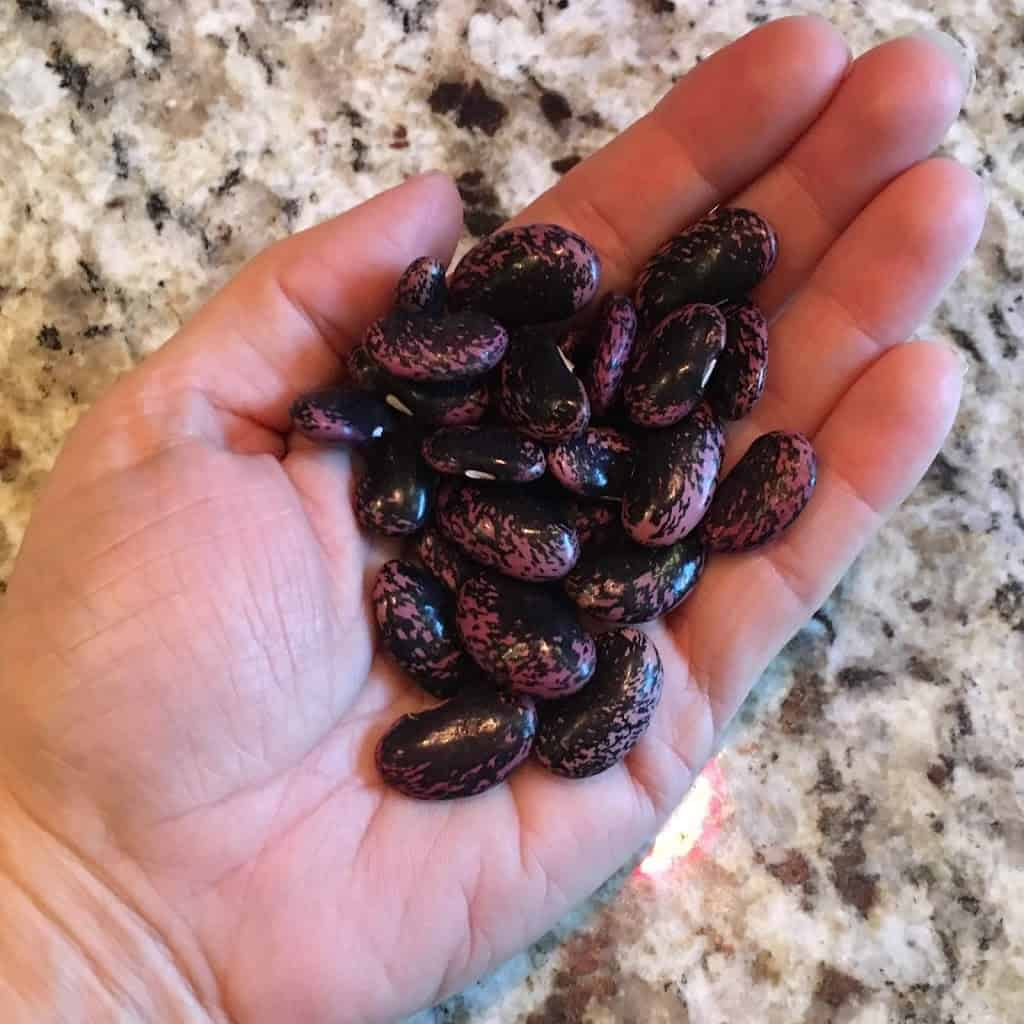 Handful of dried scarlet runner beans. https://trimazing.com