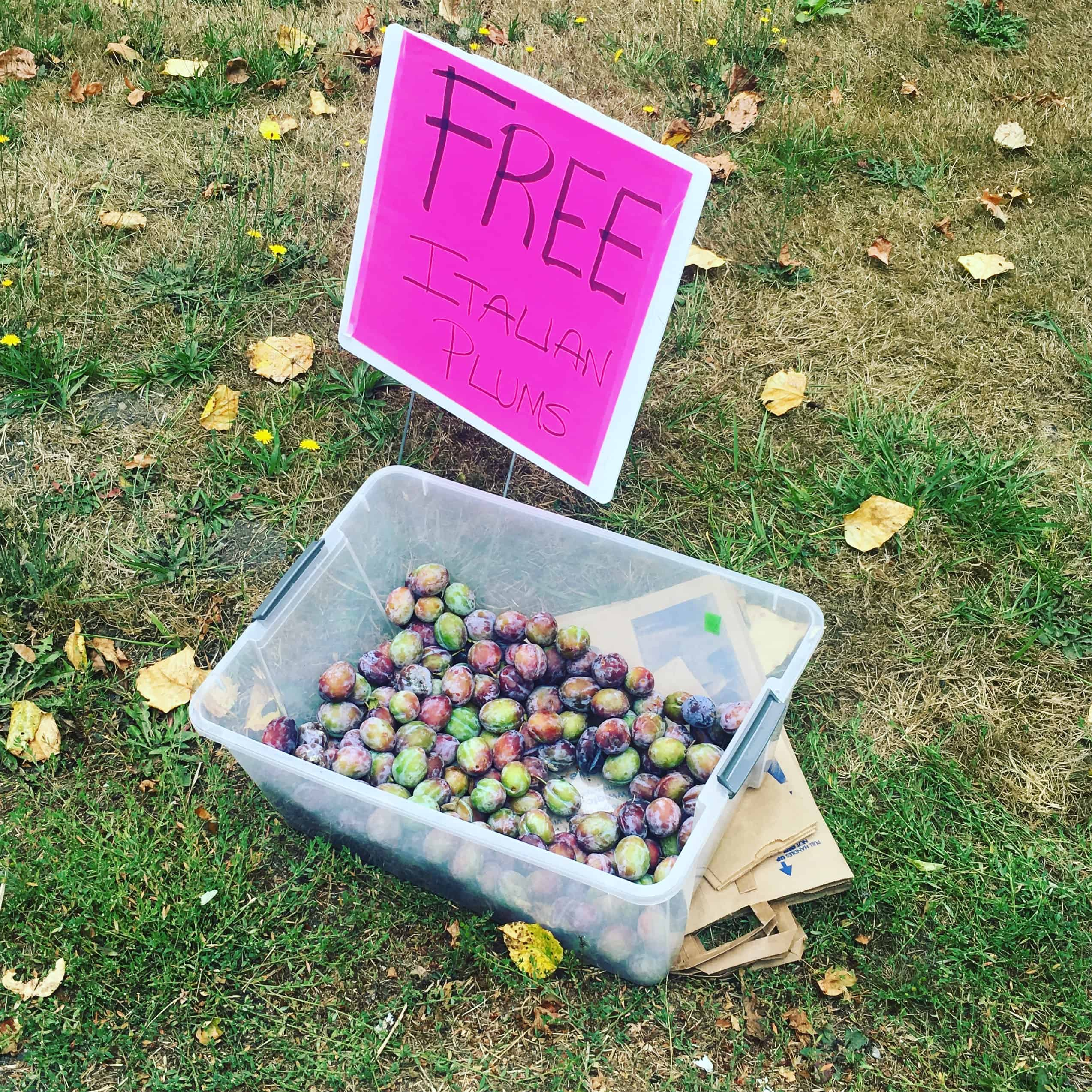 Free Plums along the side of the road! https://trimazing.com