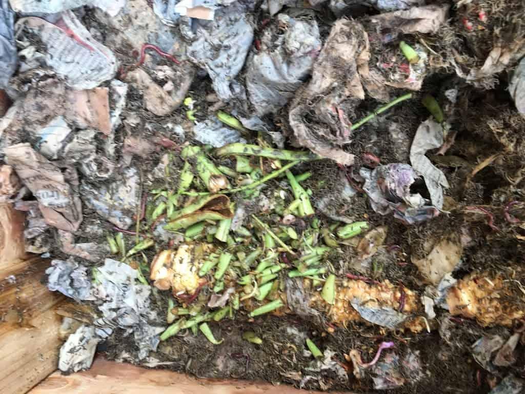 Photo of vegetable food scraps (green bean trimmings) in among bedding in worm bin. https://trimazing.com/