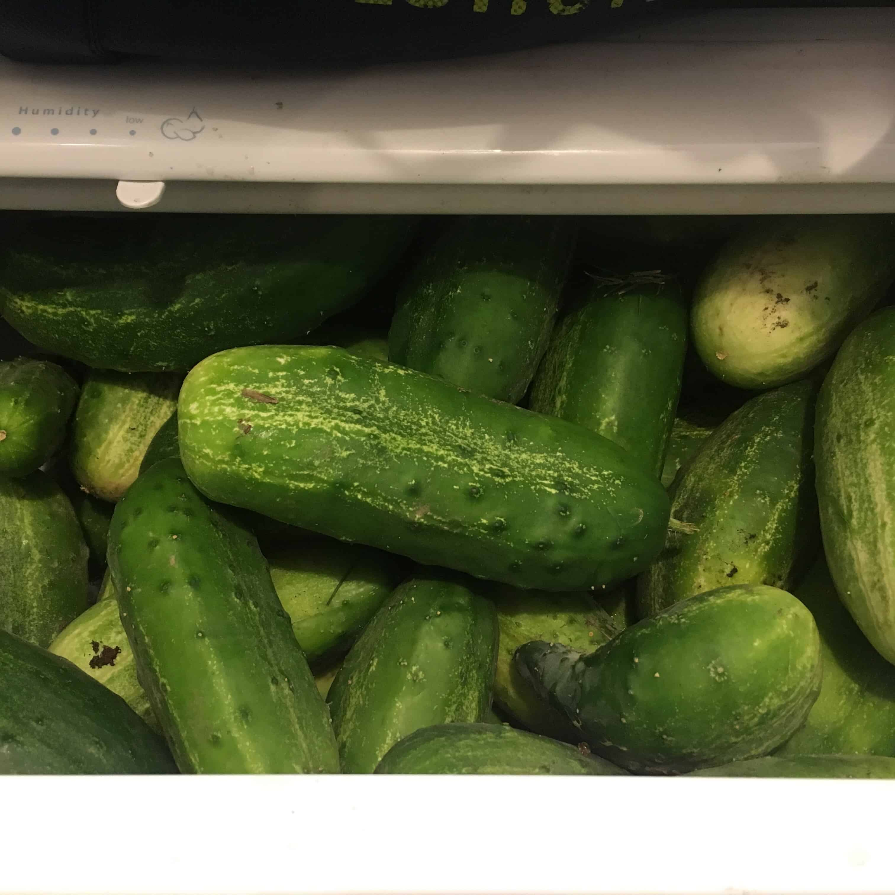 Pickling cukes in refrigerator crisper drawer. https://trimazing.com